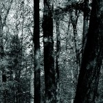 forest-640x300